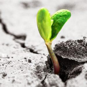 Crescere Dentro o Crescere Fuori?