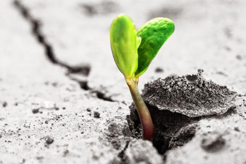 la felicità, vivere felici, essere felici, ricerca della felicità, felici, amore, la crescita, crescita personale, crescita spirituale, di successo, cambiamento, crescita felice,