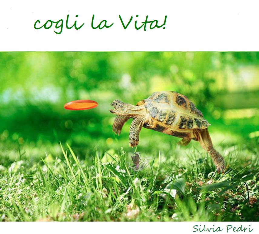tartaruga e freesbe vita