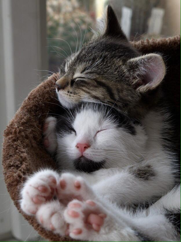 Se i gatti avevano profili di incontri