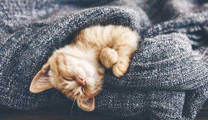 Non svegliare il gatto che dorme