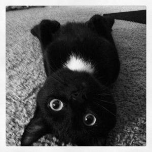 selfie nuda sul pavimento gatto rovescio