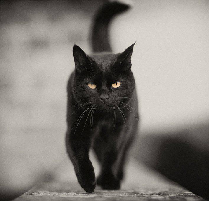 bene, male, demoni, luce, buio, purificazione, gatto, esoterismo, nuova umanità, magia