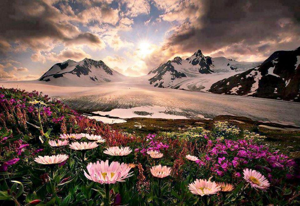fiori montagna neve_ Nuova Umanità