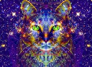 Come vedono i Gatti: incontri ravvicinati con la ghiandola pineale del felino più divino