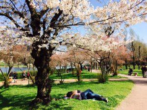 Come meditare per sbocciare a Primavera tutto l'anno