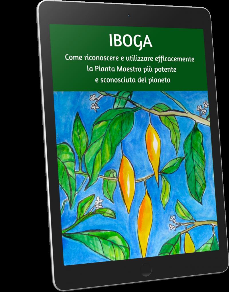 Iboga-no-background