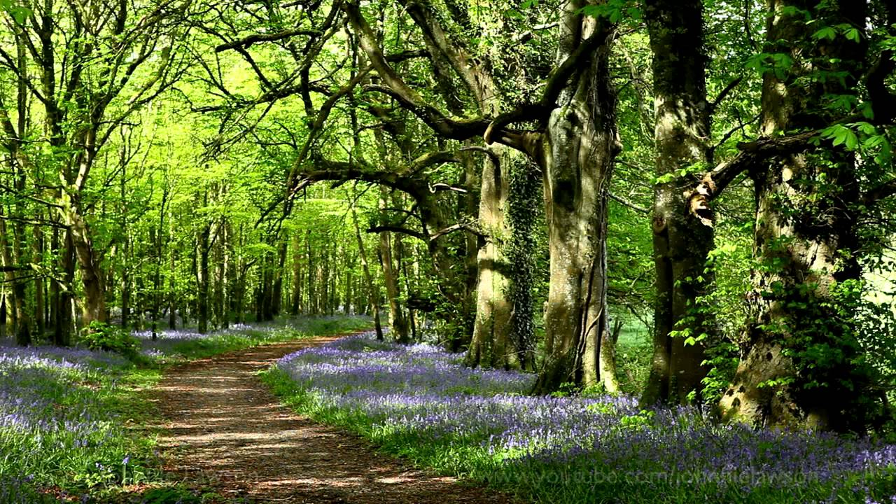 картинки релаксация лес более
