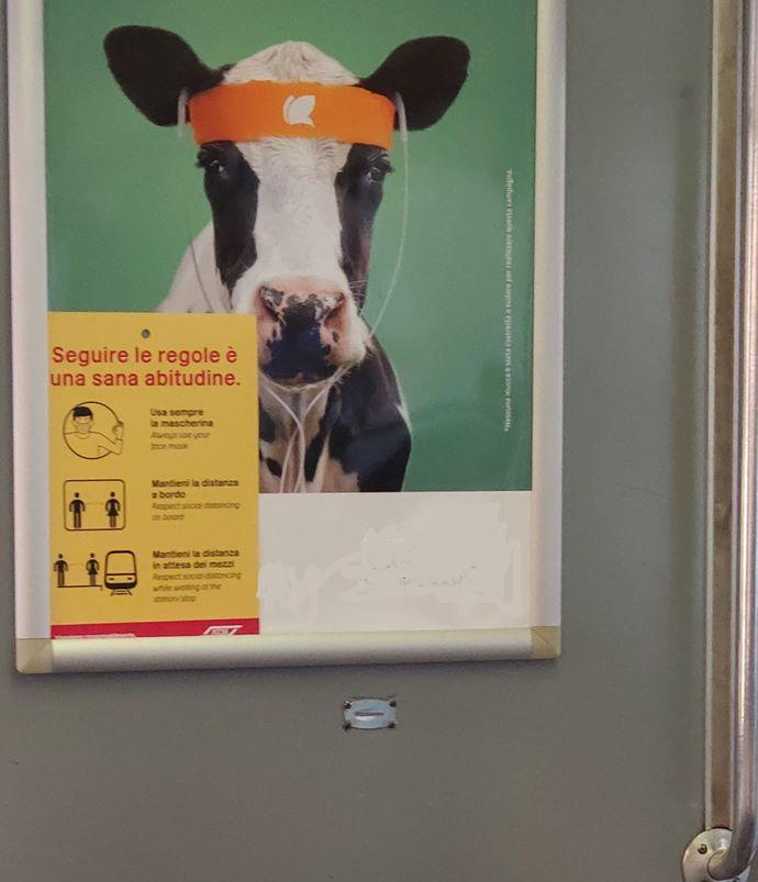 Gallo Mago Vacca e autodeterminazione - Silvia Pedri