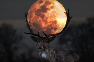 30 Dicembre: Luna Piena in Cancro – Oggi Rigeneri la Tua Vita